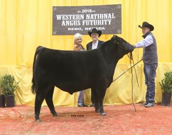 Late Junior Bull Calf Champion