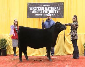 Reserve Spring Heifer Calf Champion