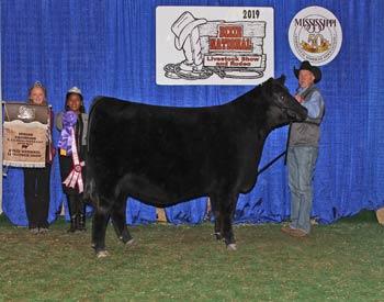 Reserve Intermediate Champion Heifer