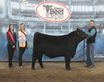Reserve Early Junior Bull Calf Champion