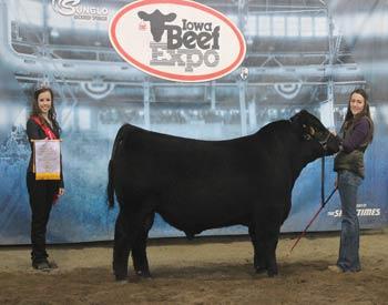 Reserve Intermediate Junior Bull Calf Champion