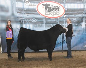 Intermediate Junior Bull Calf Champion
