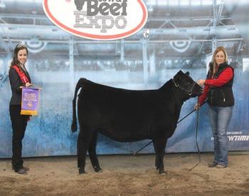 Intermediate Heifer Calf Champion
