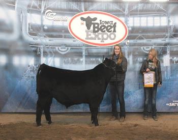 Reserve Late Junior Bull Calf Champion