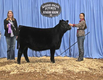 Bred-and-owned Heifer Calf Champion