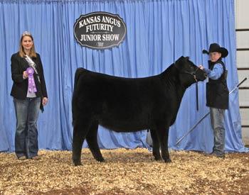 Owned Summer Heifer Calf Champion
