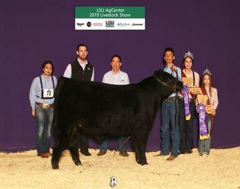 Grand Champion Owned Bull & Champion LA Bred