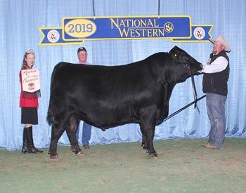 Reserve Early Junior Champion Bull