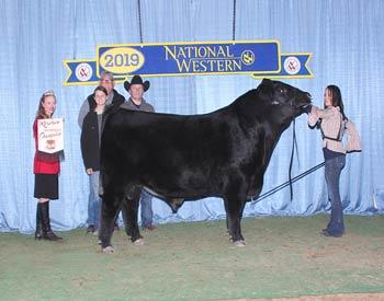 Reserve Intermediate Champion Bull