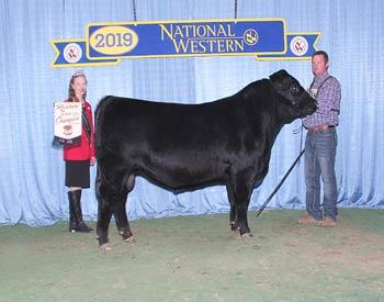 Reserve Senior Bull Calf Champion - Div 2