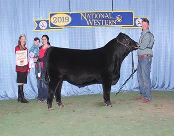 Reserve Early Winter Bull Calf Champion