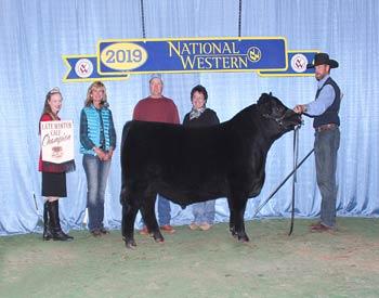 Late Winter Bull Calf Champion
