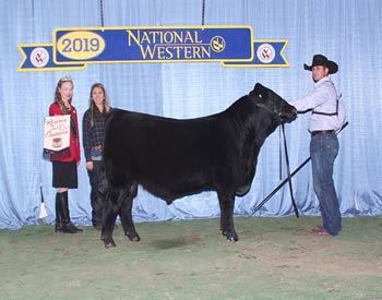 Reserve Late Winter Bull Calf Champion