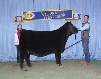 Reserve Early Junior Champion Heifer
