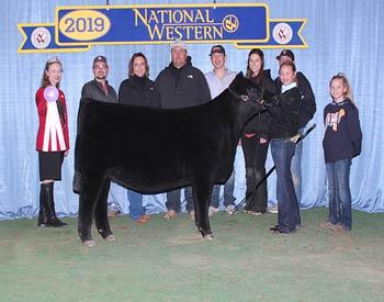 Reserve Late Junior Heifer Calf Champion