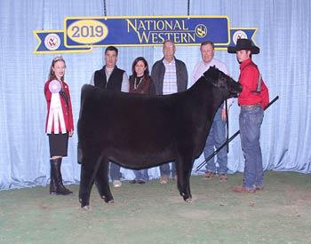 Reserve Early Junior Heifer Calf Champion