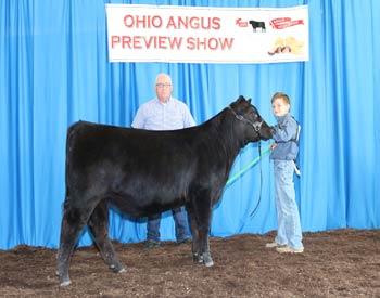 Bred-and-owned Senior Heifer Calf Champion