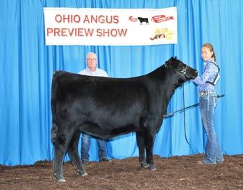 Intermediate Champion Heifer