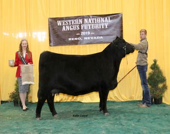 Bred-and-owned Reserve Junior Champion Heifer