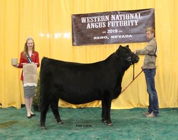 Reserve Late Heifer Calf Champion