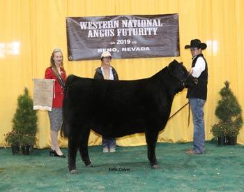 Late Heifer Calf Champion
