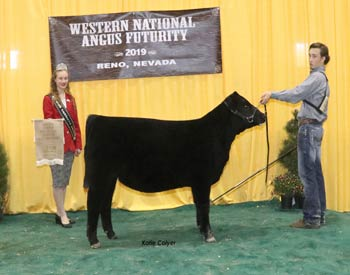 Bred-and-owned Reserve Summer Heifer Calf Champion