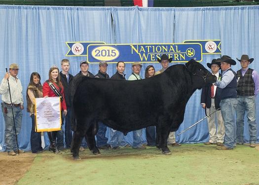 Reserve Grand Champion Bull