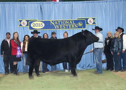 Grand Champion Sale Bull