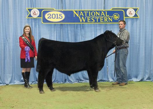 Reserve Grand Champion Sale Bull